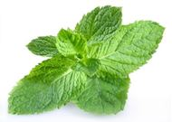 Picture of peppermint seed