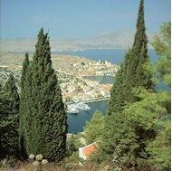 Picture of Mediterranean cypress seeds