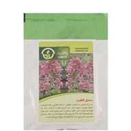 تصاویر بذر سنبل الطیب پاکان بذر