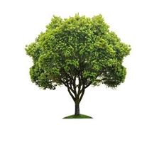 Picture for category Trees and shrubs seed