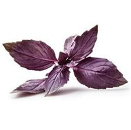 Picture of Purple basil seeds