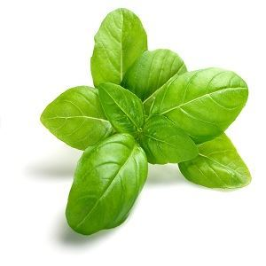 Picture of Green basil seeds