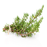 Picture of English thyme seeds